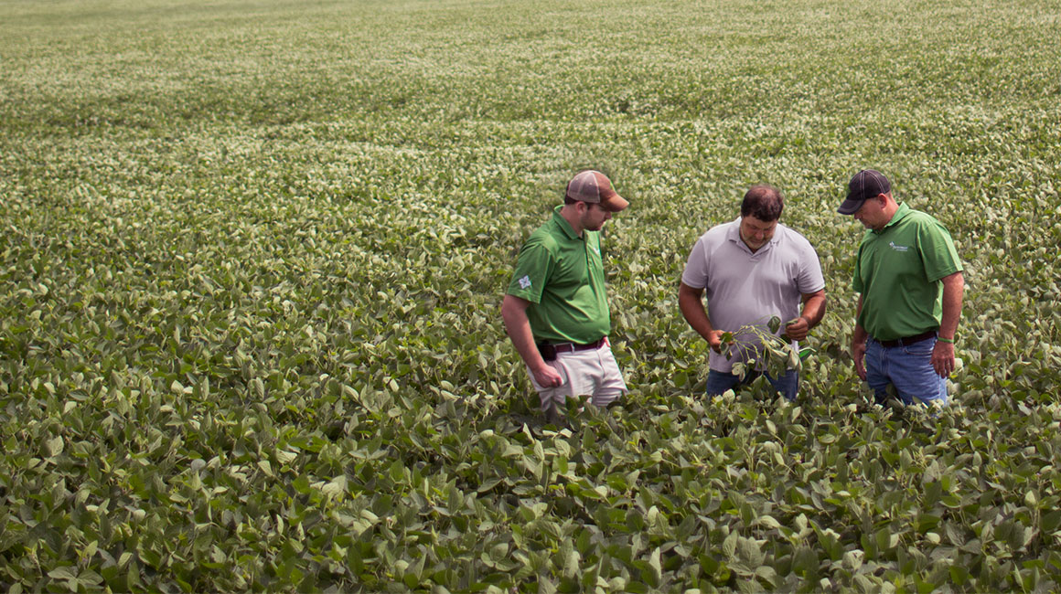 Insights - Business of Farming | Farm Credit Mid-America